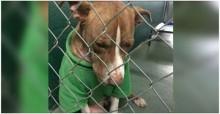Cão vira-lata é adotado momentos antes de ser sacrificado: 'Merece uma 2ª chance de viver'
