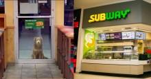 Cão de rua visita o Subway todos os dias para uma refeição grátis de funcionário super gentil (veja o vídeo)