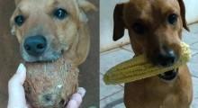 Todos os dias, cachorro vira-lata fofinho entrega mimos inusitados para dona em SP