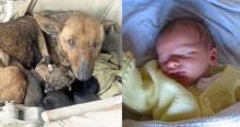 Moradora de Buenos Aires encontra cachorrinha aquecendo bebê abandonado em sua ninhada