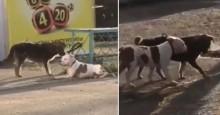 Cãozinho de rua vê buldogue amarrado e rapidamente decide libertá-lo (veja o vídeo)