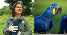 Bióloga brasileira que salvou Arara Azul da extinção concorre a prêmio