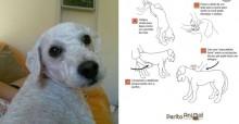 Após seu cãozinho falecer engasgado, professora escreve post ensinando como agir e texto viraliza