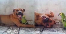Tamanho é documento? Não para esse papagaio! Confira o vídeo (e o tamanho) do cachorro 'perturbado' pela ave
