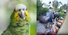 """Vizinhos se assustam com gritos de """"me deixe sair"""", ligam para polícia e descobrem que foi papagaio (veja o vídeo)"""
