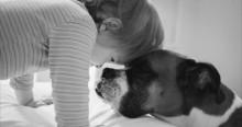 Vídeo: Cão Boxer ganha homenagem emocionante após virar estrelinha (Adeus ao meu melhor amigo!)