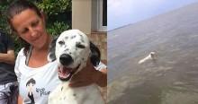 Assustado com atropelamento, dálmata foge e populares o encontram uma semana depois em lagoa