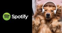Com base em pesquisa, Spotify lança playlist para aliviar estresse de cães que ficam sozinhos