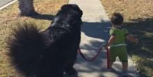 Bebê 'comanda' grandalhão peludo e conquista redes sociais; confira o vídeo
