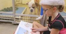 Crianças passam o dia lendo livros para cães de abrigo: 'Agora eles têm companhia'