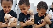 Menino encontra cachorrinho Chihuahua e começa a chorar: 'Ela é linda demais' (veja o vídeo)