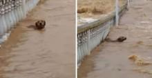 Em vídeo impressionante, cão quase é levado por forte correnteza de rio do ES