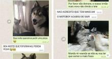Gato e cão husky pedem pizza pelo WhatsApp e atendente se apaixona (confira a sequência)
