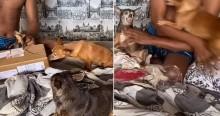 Cães 'irmãos' pinschers ganham presente, um fica com ciúme do outro e dá confusão (veja o vídeo)