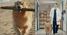 Dono de golden retriever paga comercial milionário para agradecer veterinários pela cura de cão com câncer