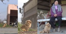 Mesmo com chuva, frio ou neve, cão leal espera por idosa todos os dias em parada