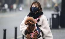Coronavírus: em vilarejo chinês, há prazo de 5 dias para moradores se desfazerem de pets