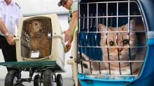 """Gatos morrem durante vôo e empresa diz que animais não passam de """"uma bagagem"""""""