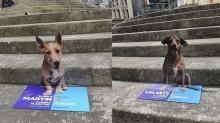 Instituição animal cria 'réplica' de pets abandonados e espalha por Florianópolis para incentivar adoção