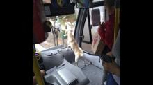 Mulher adota cão, motorista permite que ela leve-o em ônibus e passageiros se encantam