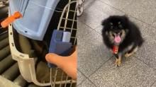 Passageiro lamenta descaso da Gol com seu cachorro que ficou ferido durante vôo