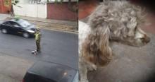 Policial arrisca própria vida para resgatar cadela atropelada no meio da rua