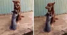 Cachorro recebe 'massagem relaxante' de gatinho em vídeo super fofo; assista!