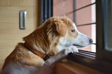 Tutores que viajam e deixam pets sozinhos em casa podem ser multados e até perder os animais