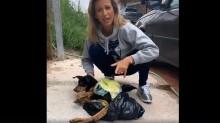 Cachorro é atropelado, fica paraplégico, é abandonado e é salvo por Luisa Mell (veja o vídeo)
