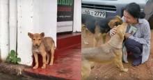 Cão vira-lata resgatado reconhece seus salvadores três anos depois