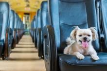 Projeto que permite o transporte de pets no transporte coletivo avança no Senado