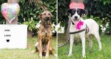 Abrigo Municipal de Sorocaba lança campanha de adoção de seus cães e gatos