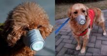 Com o surto de Coronavírus, cachorros passam a usar máscaras na China