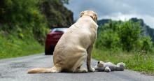 Deputada Carla Zambelli cria Projeto de Lei que aumenta a pena para o crime de maus-tratos a animais