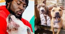 Jogador comemora vitória de time patrocinando 109 adoções de cachorros