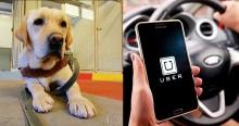 Uber não irá mais cobrar taxa de limpeza, nem de cancelamento a passageiros com cão-guia