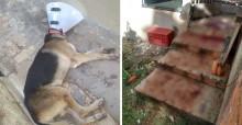 Indignação: Cão de Policial Militar é agredido a golpes de facão e gera revolta em SP