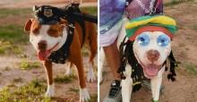 Bloquinho de rua reúne cães caprichosamente fantasiados no RN; veja fotos
