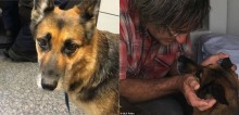 Após barco de dono afundar, cão pastor alemão nada por 11 horas em busca de ajuda