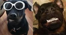 Cão rottweiler com rosto torto sempre rejeitado em adoções encontra família que o considera perfeito