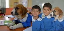 Cão resgatado por professores ganha abrigo, uniforme e passa a frequentar sala de aula