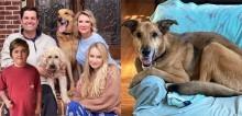Cão idoso abandonado por ser 'velho demais' conquista coração de família que queria adotar um filhote