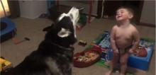 Criança de 2 anos compete com cachorro husky quem uiva mais e vídeo ganha milhões de visualizações