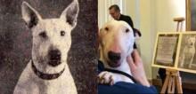 Bull terrier mascote de soldados prisioneiros na 2° Guerra Mundial recebe homenagem póstuma