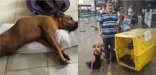 Homem viaja do RN até SP para adotar cão que sofreu grave acidente e ficou paraplégico