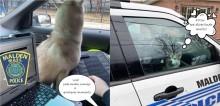 'Você tem o direito de permanecer fofo': Policial captura husky perdido e cão ganha dia de K9