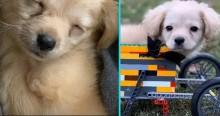 Abandonada por ser deficiente, filhote é adotada e ganha cadeira de rodas feita de lego por menino de 12 anos