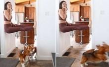 Dona brinca de esconde-esconde mas cães corgis não a encontram pois são baixinhos demais