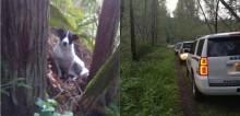 Homem falece durante caminhada em floresta e cadela permanece ao seu lado até chegada da polícia