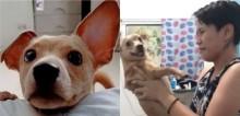 Mulher faz pegadinha com seu cachorro fingindo que ele é invisível e vídeo faz sucesso na internet